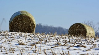 Snow May Be the Last Straw For Farmers