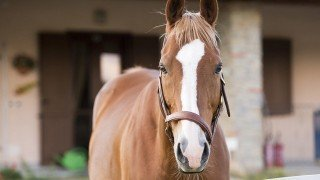 Horses can cause bankruptcy